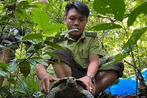 Quảng Nam: Thả 5 cá thể rùa quý hiếm về rừng tự nhiên