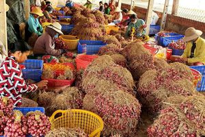 Tìm giải pháp hỗ trợ nông dân tiêu thụ củ hành tím