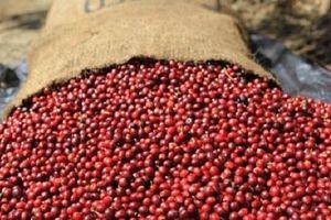 Giá cà phê hôm nay 23/4: Tăng giảm trái chiều; Việc bán hàng từ Việt Nam gặp khó; Nhu cầu tiêu thụ có thể giảm mạnh