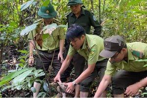 Thả 5 cá thể rùa núi viền quý hiếm về lại rừng tự nhiên