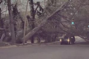 Cây cổ thụ bất ngờ bật gốc, lái xe SUV thoát chết trong gang tấc