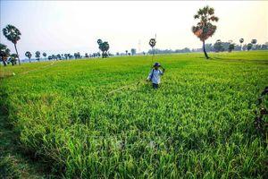 Phát triển bền vững vùng Tứ giác Long Xuyên