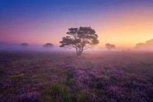 Đắm mình trong buổi sáng mùa Thu đẹp tựa xứ sở thần tiên ở Hà Lan