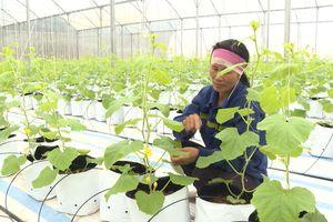 Tạo sức bật cho sản xuất nông nghiệp