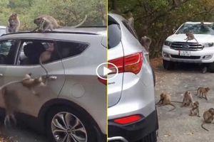 Chiếc xe trở thành 'khu vui chơi' cho bầy khỉ chỉ vì quên đóng cửa kính