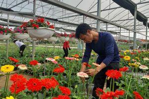 Kiến nghị xem xét hoa - cây cảnh là ngành kinh tế mũi nhọn