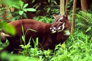 10 loài sinh vật kỳ lạ được phát hiện tại Việt Nam