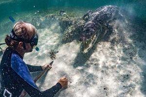 Du lịch mạo hiểm tiếp cận cá sấu khiến du khách thích thú