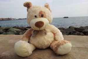 Ai phát minh ra gấu bông?