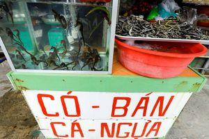 'Thần dược phòng the' ở làng chài Hàm Ninh