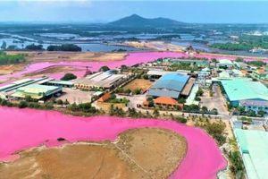 Nguyên nhân nước biến màu hồng tím là do tảo nở hoa