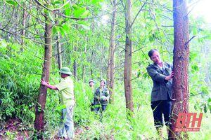 Bảo vệ và phát triển rừng bền vững ở huyện Lang Chánh