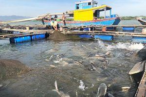 Cải tiến công nghệ để giảm thiệt hại trong nuôi trồng thủy sản