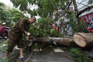 Cây đổ, đường phố tê liệt vì mưa lớn