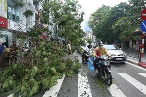 Hà Nội: 6 cây xanh đổ, nghiêng trên các tuyến phố sau trận mưa lớn
