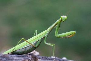 Nhìn rùng mình, nhưng những côn trùng này lại quý hiếm ở Việt Nam