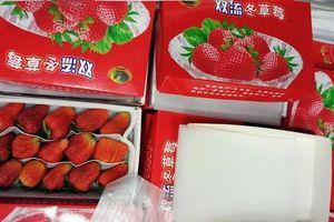 Mười ba thùng dâu tây nghi của Trung Quốc 'bay' vào Đà Lạt