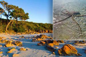Cận cảnh bạch tuộc nổi giận tấn công người đàn ông trên bãi biển
