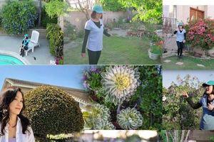 Choáng ngợp với khu vườn đầy hoa ở Mỹ của nghệ sĩ Hồng Đào