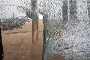 Video hổ vồ ngã dân làng, lao vỡ kính ô tô tại Trung Quốc