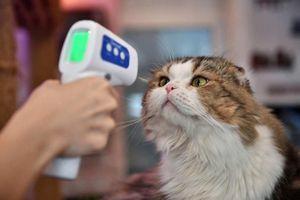 Phát hiện bằng chứng COVID-19 lây từ người sang mèo tại Anh