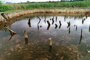 Cấp phép thăm dò khảo cổ tại một số khu vực thuộc di tích lịch sử Bạch Đằng