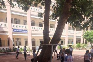 Mùa mưa bão tại Cần Thơ: Trường học lo 'sức khỏe' cây xanh