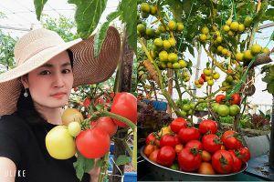 Vườn trĩu trái trên sân thượng 100m2 của bà chủ ở Đà Nẵng
