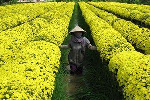 Hướng đến phát triển kinh tế nông nghiệp bền vững, nâng cao giá trị và thu nhập