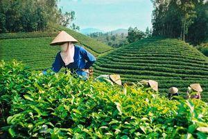 Phân bón Văn Điển góp phần phát triển nông nghiệp bền vững cho đồng bào dân tộc Thái Nguyên