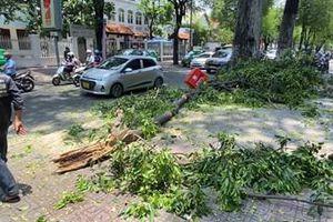 Nhánh cây cổ thụ bất ngờ đổ xuống đường, nhiều người tháo chạy kịp thời