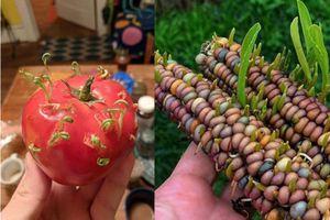 Mua trái cây bắt gặp cảnh tượng đáng sợ, thực ra lại là một hiện tượng thường gặp