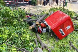Trời không mưa gió, cành cây lớn rơi đè xe máy, xe đạp ở Sài Gòn