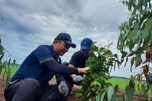 3M cùng WWF-Việt Nam trồng 8.000 cây xanh, cam kết phát triển bền vững