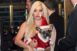 Bắt giữ 5 kẻ tình nghi trong vụ cướp thú cưng của Lady Gaga