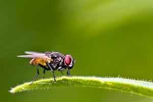 Nguy cơ mắc bệnh lây từ ruồi mùa hè tăng lên, cần phải làm gì?