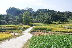 Xây dựng Nông thôn mới ở vùng đặc biệt khó khăn: Đường mới, tư duy sản xuất mới