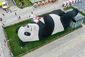 Tượng gấu trúc 130 tấn nằm selfie giữa quảng trường ở Trung Quốc