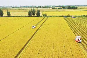 Đồng bằng sông Cửu Long: 46 năm vựa lúa chuyển mình
