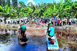 Tái hiện thu hoạch cá đồng ở miệt rừng U Minh hạ