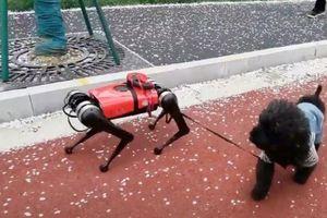 Chó robot biết dẫn đường cho người mù, canh giữ nhà khỏi kẻ đột nhập