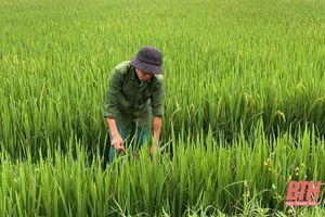 Nâng cao năng lực dự báo, giám sát phòng, trừ dịch hại trên cây trồng
