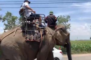 Nhiều người bức xúc khi voi Tây Nguyên bị vắt kiệt sức, oằn lưng chở du khách