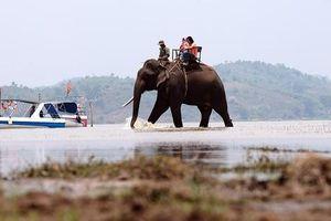 Trải nghiệm cưỡi voi tham quan hồ nước ngọt lớn nhất Tây Nguyên