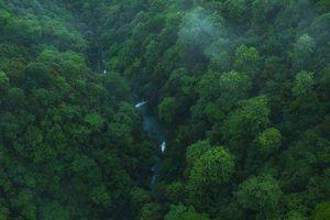 'Lá phổi của Trái đất' đang kêu cứu! Rừng nhiệt đới Amazon thải ra nhiều CO2 hơn lượng hấp thụ