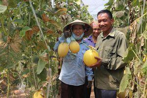 Du lịch tạo đà cho nông nghiệp phát triển bền vững