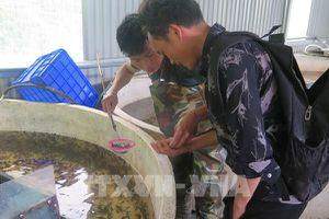 Lào Cai phát triển bền vững nghề nuôi cá nước lạnh