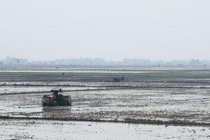 Toàn tỉnh đã xuống giống hơn 147 ngàn ha lúa hè thu