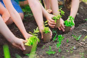 Ngành Giáo dục và Đào tạo: Triển khai phong trào trồng cây xanh