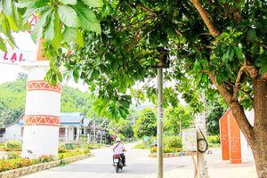 Biển báo, đèn tín hiệu giao thông bị tán cây che khuất